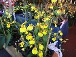 flowers-market-little-saigon-2012-38-large-content